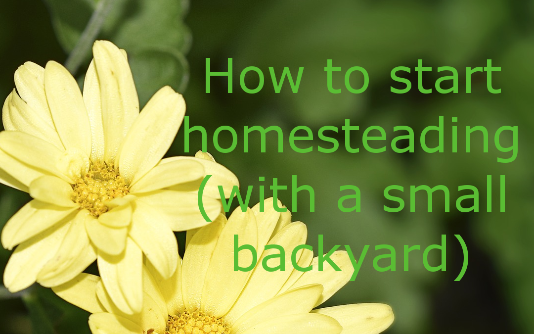 How To Start Homesteading (with a small backyard)